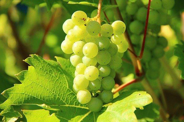 grapes-276070_640